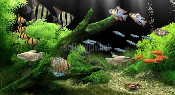 3д заставки аквариума на рабочий стол скачать бесплатно