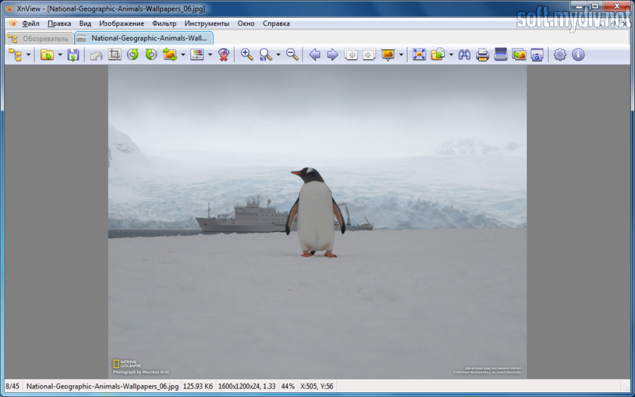 XnView  Image viewer Photo Resizer Graphic Converter
